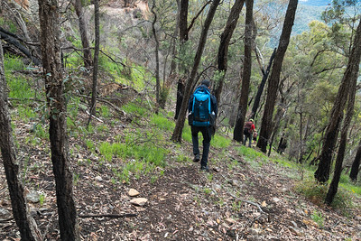 Cattle Dog Ridge descent