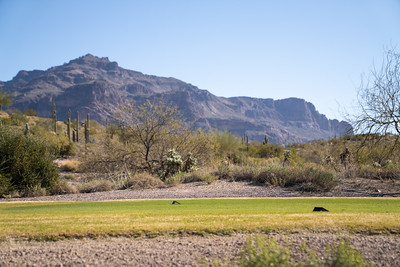 Superstition Mountain Country Club-128