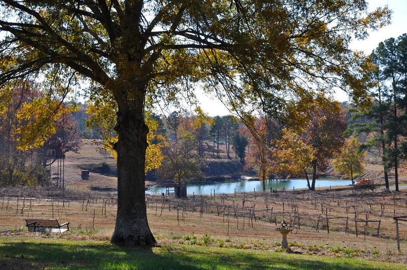 Treehouse Vineyard in Monroe