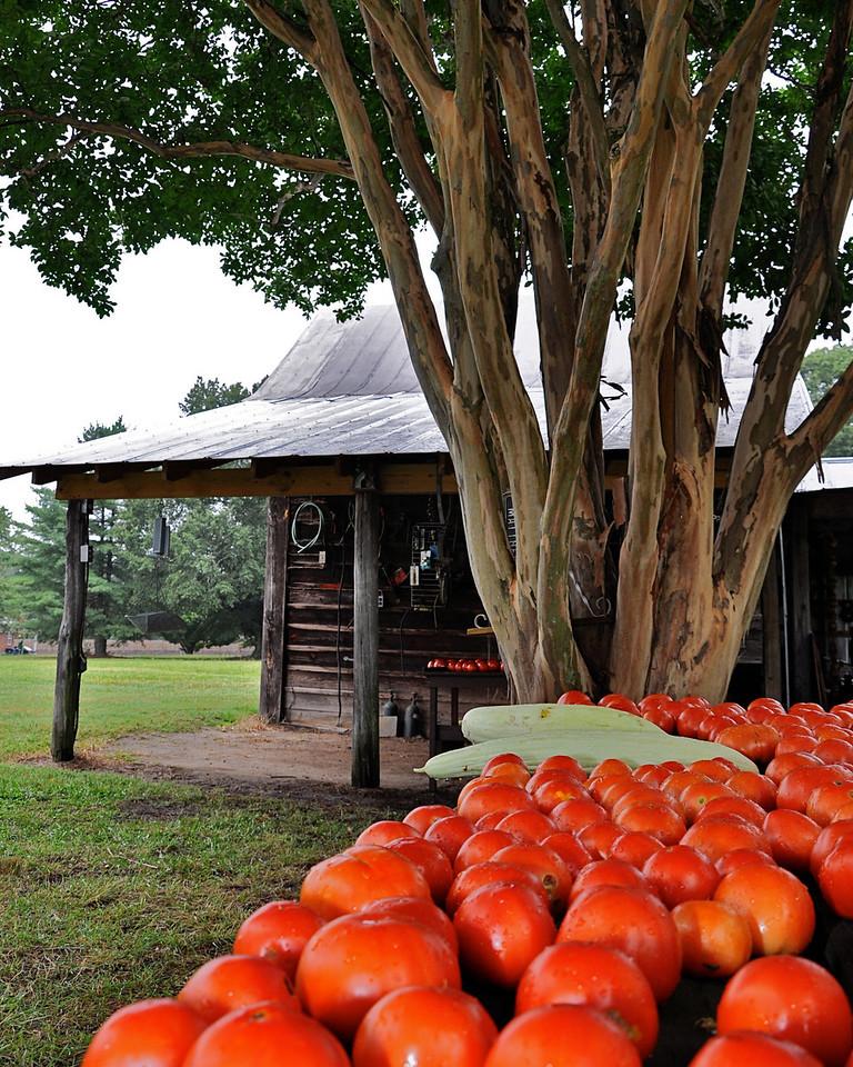 Tomato Barn Pleasant Plains Rd Indian Trail, NC