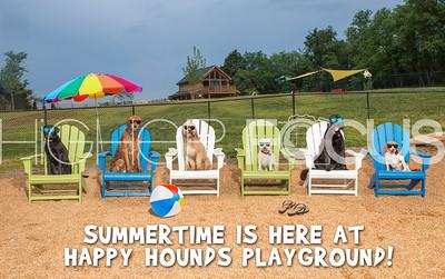 BeachDogs-Summertime