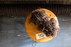 Green Mountain Spinnery yarn; KELLY FLETCHER, REFORMER CORRESPONDENT