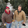 Tiny's Trees celebrates 50 years in business this holiday season. Owners Mike and Rick Dupuis stand among the trees they still have left in there lot on John Fitch High Way in Fitchburg. SENTINEL & ENTERPRISE/ JOHN LOVE