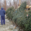 Tiny's Trees celebrates 50 years in business this holiday season. They still have plenty of trees left if you have not gotten one yet. SENTINEL & ENTERPRISE/ JOHN LOVE