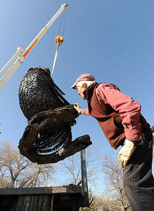 Robert Bellows looks under the 5,000-lbs metal rooster he made. as it is loaded on the truck. Robert Bellows has spend 11-months working on a sculpture of a rooster,  made from farm implements, that will be placed outside Alfalfa's Market in Boulder. For more photos of the rooster and a video, go to www.dailycamera.com. December 9, 2011 / Cliff Grassmick