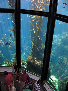 Big aquarium at MBA.