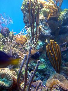 Montery Bay Aquarium