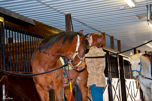 Horse2-5