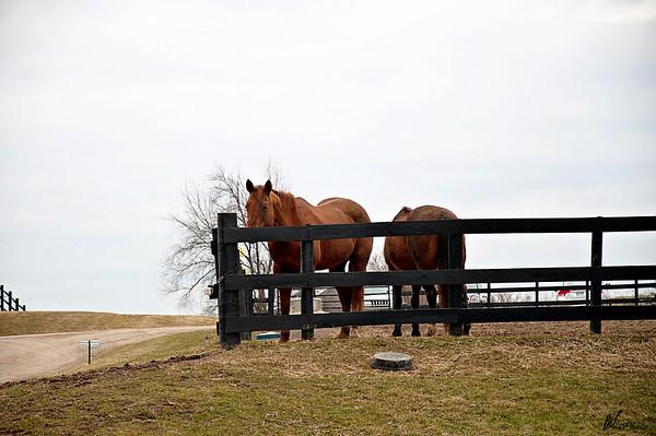 Horse2-34