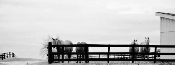 Horse2-35BW