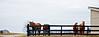 Horse2-35