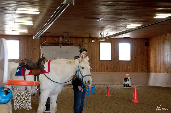Horse2-10