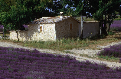 Old Stone House Amid the Lavender Fields