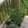 Corner of back deck.
