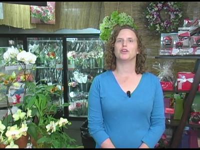 A Whole Bunch Flower Market - Spotlight Video