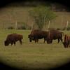 Yoakum TX Nov 10, 2012