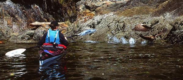 CRC Kayak and geese_adjLR-2