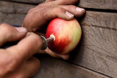 Orchard_0006