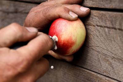 Orchard_0007