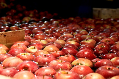 Orchard_0011