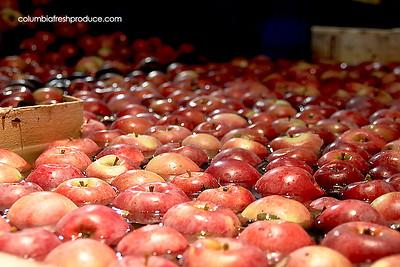 Orchard_0018