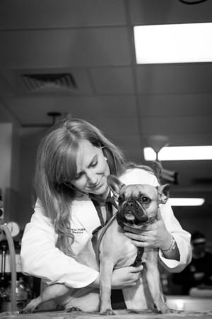 Care Animal Referral & Emergency