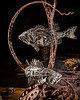 Untitled Fish Sculpture by John Pahlas