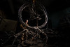 """Driftless Sanctuary"" by John Pahlas"