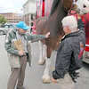 One of the famed Budweiser Clydsdale horses, Sumo, made an appearance at Wyman's Liquor's on Wednesday around noon. The horse's handler Burt Westbrook holds on to his reins as Ed Howard of Clinton, 77,  pets Sumo during his visit to the store. SENTINEL & ENTERPRISE/JOHN LOVE