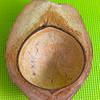coconut_designs34