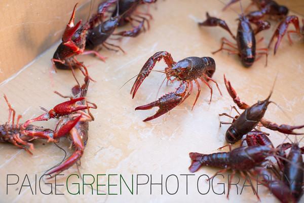 07/30/2016 - Crayfish Boil