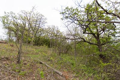 Restoring a Ridge