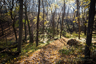 Stewart County Park Trail