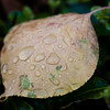 I found this wet leaf in some bushes just as it finished raining