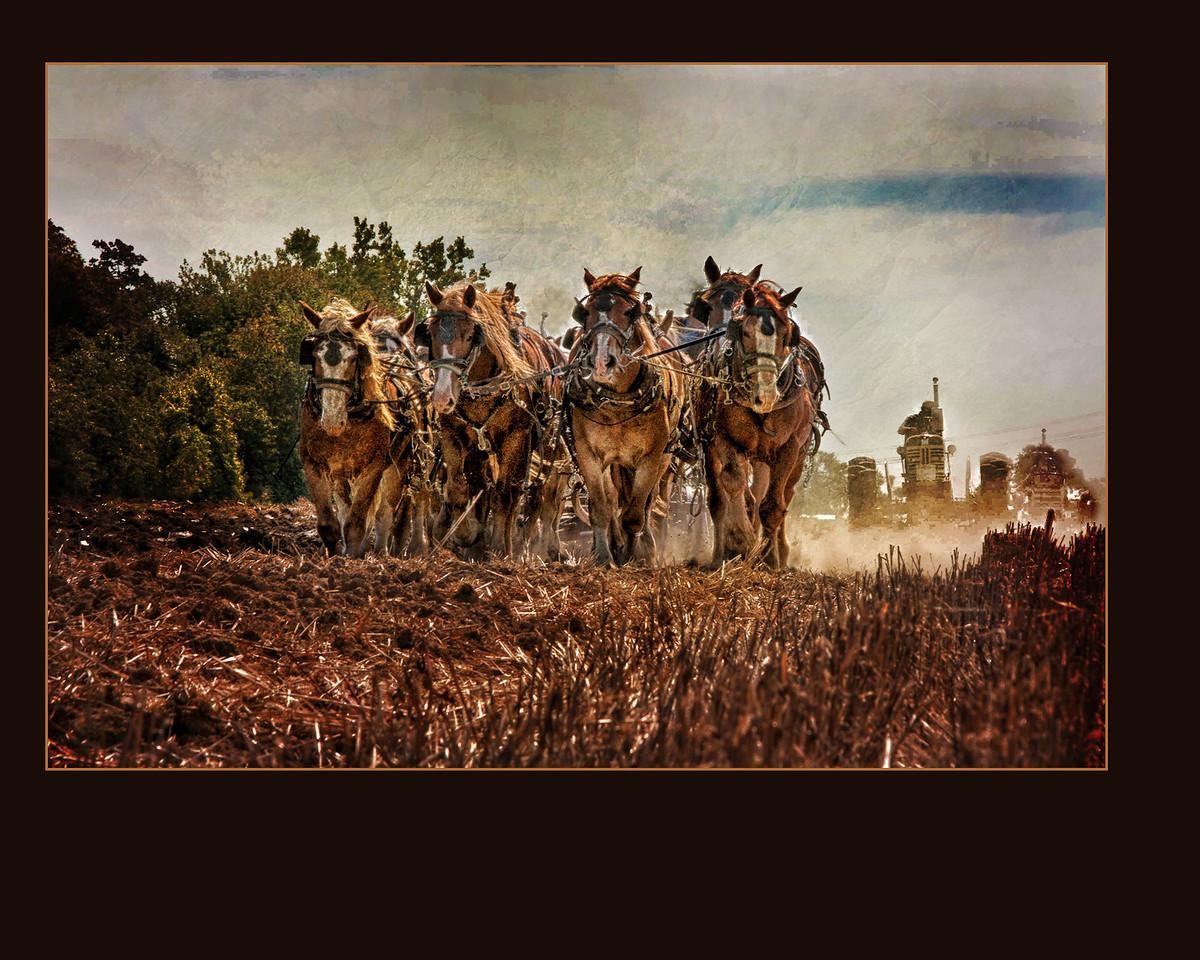 horses-3896a
