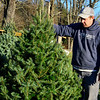 Dustin Manix, crew boss at Elysian Hills Tree Farm, in Dummerston, Vt., looks over the various trees that are for sale.