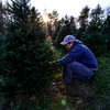 Dustin Manix, crew boss at Elysian Hills Tree Farm, in Dummerston, Vt., uses a bone saw to cut down a tree that he is bringing to the tree stand.