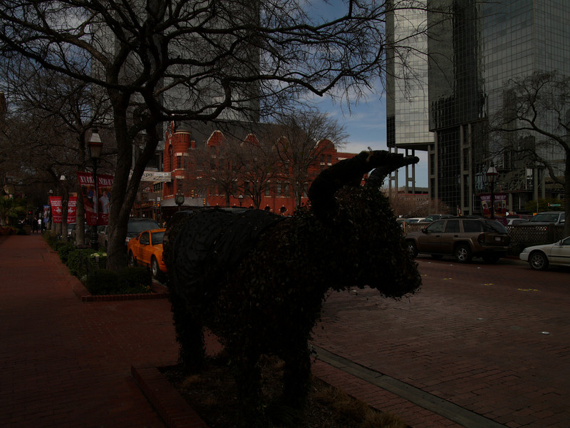 Cow Town - straight out of the camera.