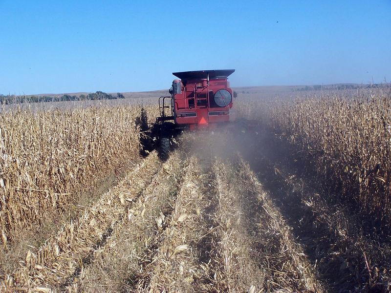 It is Harvest Time in Lexington Nebraska