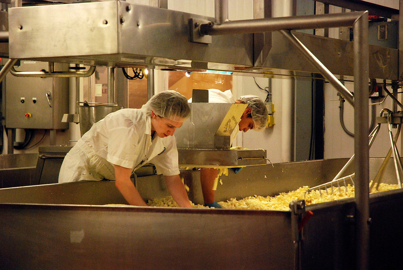"""Kayla Rice/Reformer               <br /> Employees at the Grafton Village Cheese Company bring the cheese through its """"cheddering"""" process."""