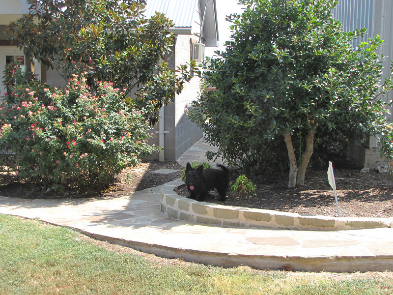 "ANGUS, why do you always ""water"" my bushes??? <br /> <br /> Updated summer 2010"