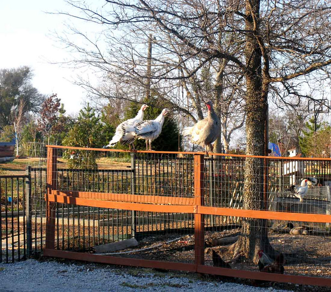 This is a view from Kennels 8-15 - Your doggies will enjoy barking at the barnyard animals while they are here!! Just another way we here at Green Acres Garden add happiness to your pets stay with us!! LOL