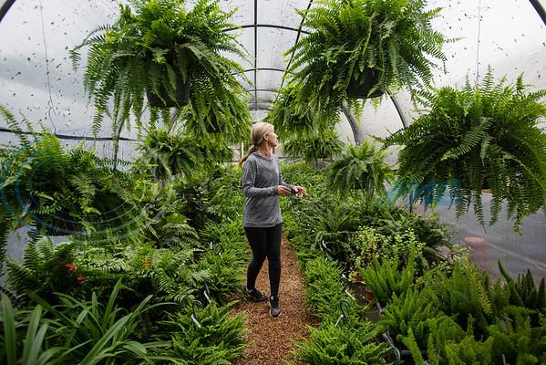 Karen Hand of Hand Nurseries walks through her fern greenhouse on Friday, March 20, 2020.
