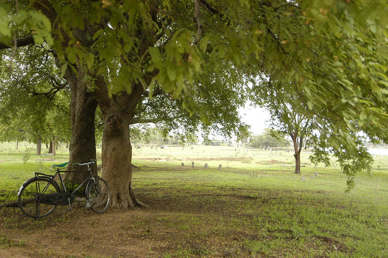 Tree and bike at MS's 92 acre site in Hyderabad