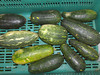 La Colonia Nicaragua 3-4 sept 2009 036