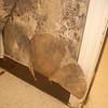 Lakeshore Environmental Contractors, LLC - Mold Remediation