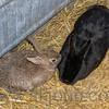 the_farm_easter__022