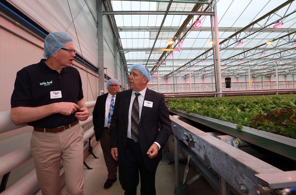 . Official opening of expansion of Little Leaf Farms greenhouse, from 2.5 acres to 5 acres, for hydroponic growing of baby lettuce and other greens.  Little Leaf Farms founder and CEO Paul Sellew, left, and Mike Maguire of Tyngsboro, Director of Produce for Market Basket Supermarkets, on tour of greenhouse. (SUN/Julia Malakie)
