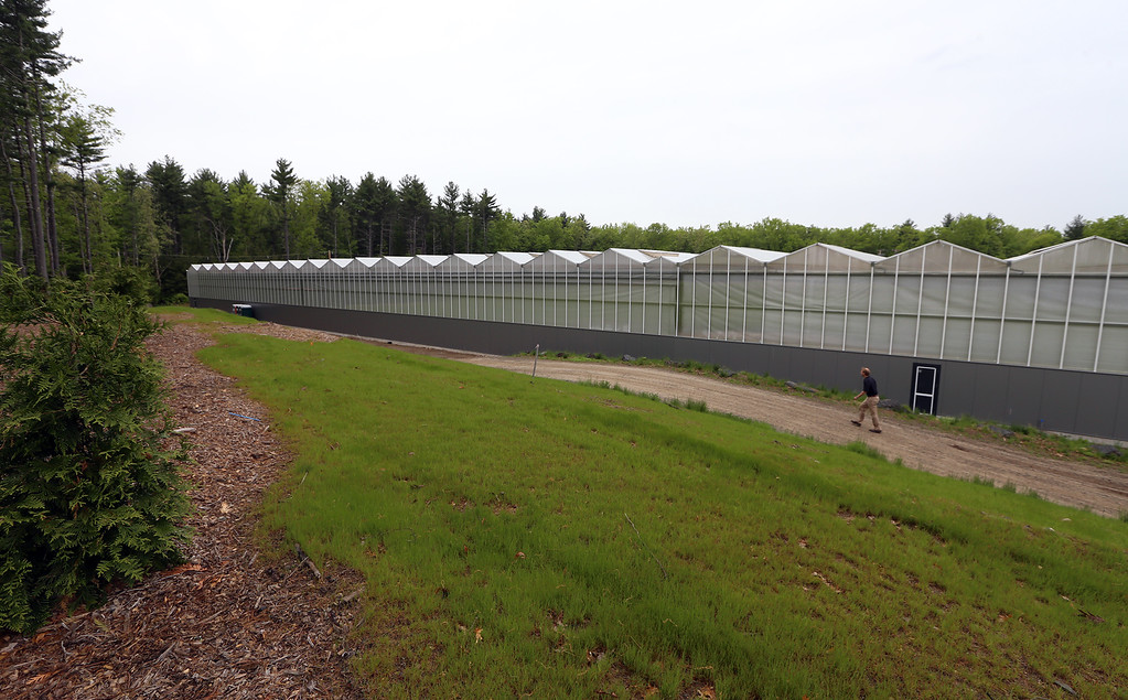 . Official opening of expansion of Little Leaf Farms greenhouse, from 2.5 acres to 5 acres, for hydroponic growing of baby lettuce and other greens. Addition extends the greenhouse north. (SUN/Julia Malakie)