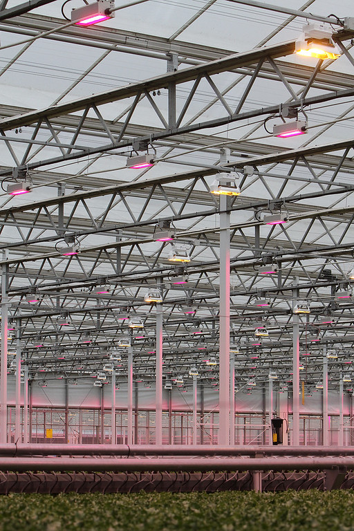 . Official opening of expansion of Little Leaf Farms greenhouse, from 2.5 acres to 5 acres, for hydroponic growing of baby lettuce and other greens.  Artificial light makes up for a rainy day. (SUN/Julia Malakie)